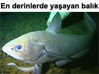En derin sularda ya�ayan bal�k | BBC video haber